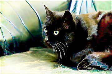 Schwarze Katze von Margitta Frischat