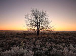 The Tree van Ron de Vries