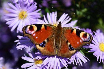Ein bunter Schmetterling von Ulrike Leone