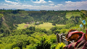 Colombiaanse koffievelden von Ronne Vinkx