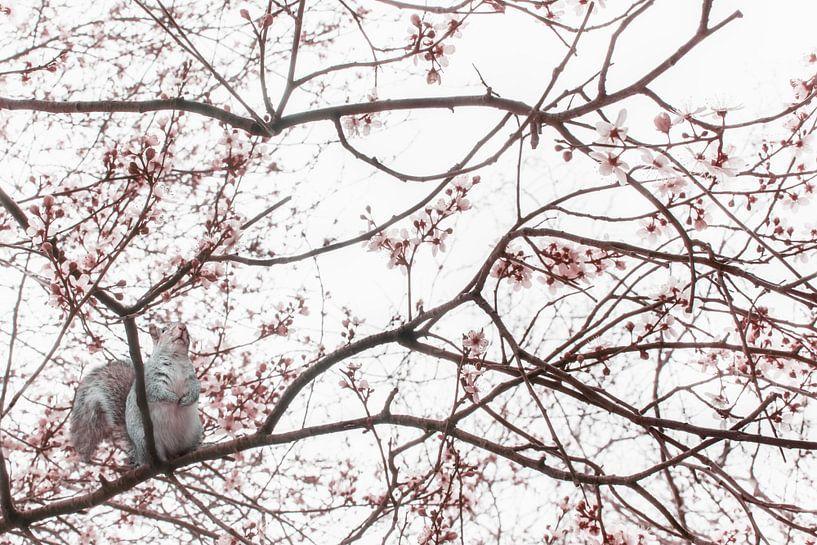 Squirrel in the tree van Elianne van Turennout