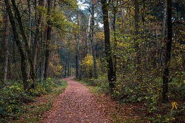 Winding Forest Path  van William Mevissen