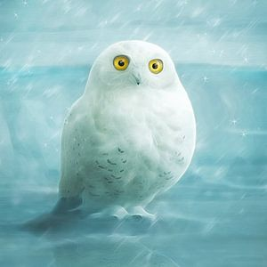Snowball van