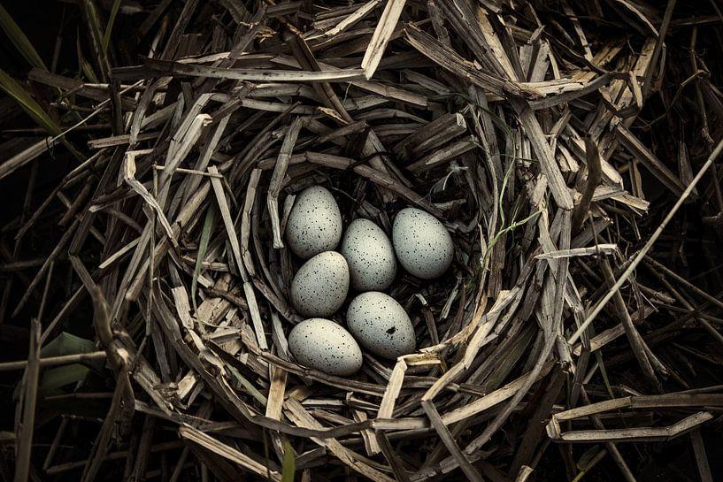 Eieren van Martzen Fotografie