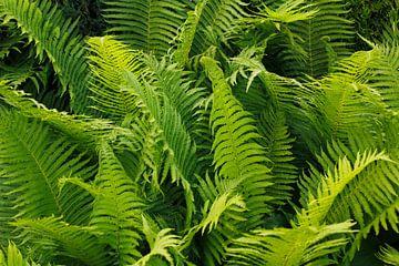 Grün von Ostsee Bilder