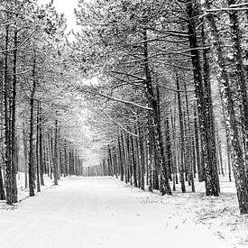 Winter op Terschelling (Longway) van Albert Wester Terschelling Photography