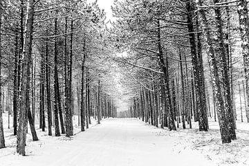 Winter op Terschelling (Longway) von Albert Wester Terschelling Photography