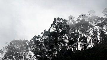 Mistige ochtend in natuurpark Chicaque (bij Bogotá) in Colombia van Jessica Lokker