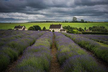 Lavendel boerderij in The Cotswolds Engeland van Jan van der Vlies