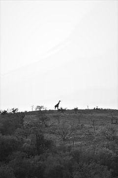 giraf op de heuvel in afrika van Christiaan Van Den Berg