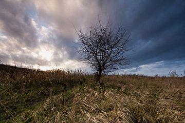 Onzichtbare Winter van Sander Meertins