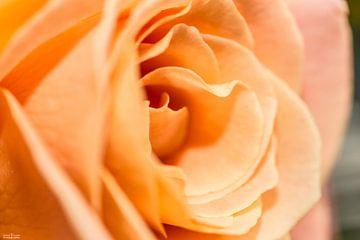 Bloemen von Richard Lentjes