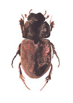 Print van een kever, bijzondere insecten illustratie van Angela Peters