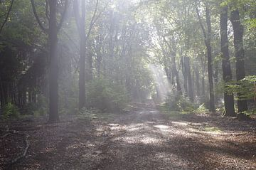Bomen met zonlicht van Ad Steenbergen