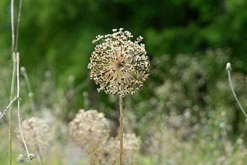 gedroogde bloemen van Henriette Tischler van Sleen