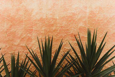Cactus | Brazilië van Vandaag is nu