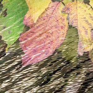 Waterbladeren van