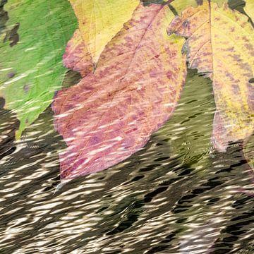 Waterbladeren von Leo Drughorn