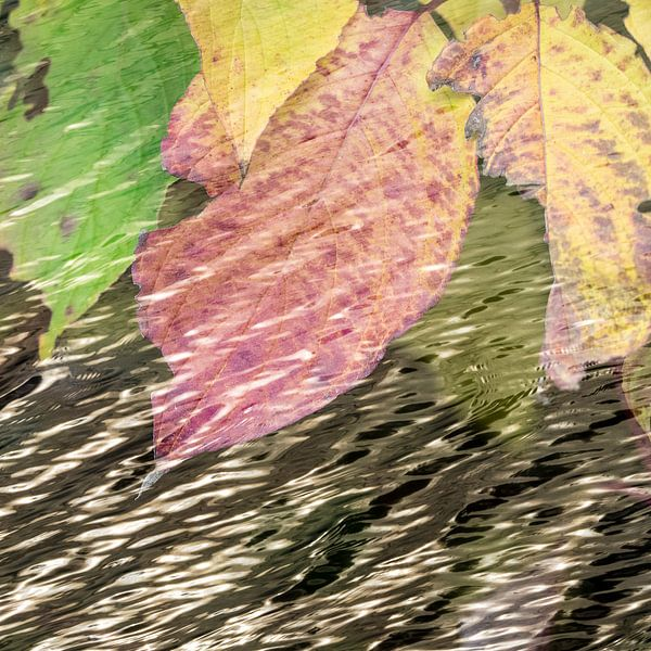 Waterbladeren van Leo Drughorn