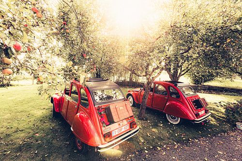 Twee Citroën 2CV  rusten uit in een appel boomgaard op een mooie zomerdag in België