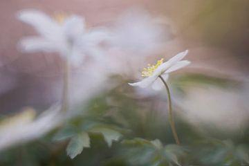 schöne Blume von Remco loeffen