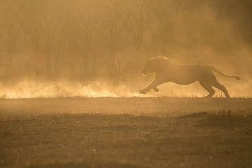 rennende leeuw van gj heinhuis