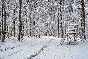 Hoge zitplaats in het winterse bos van Uwe Ulrich Grün