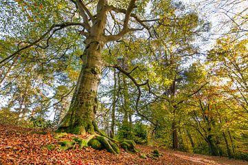 Kaapse bossen in herfsttooi van Leontine van der Stouw
