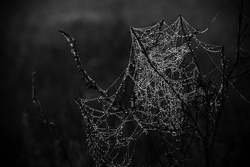 Spinnennetz mit Morgentau von Daniel Osthues