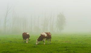 Good misty morning ... van Marc de IJk