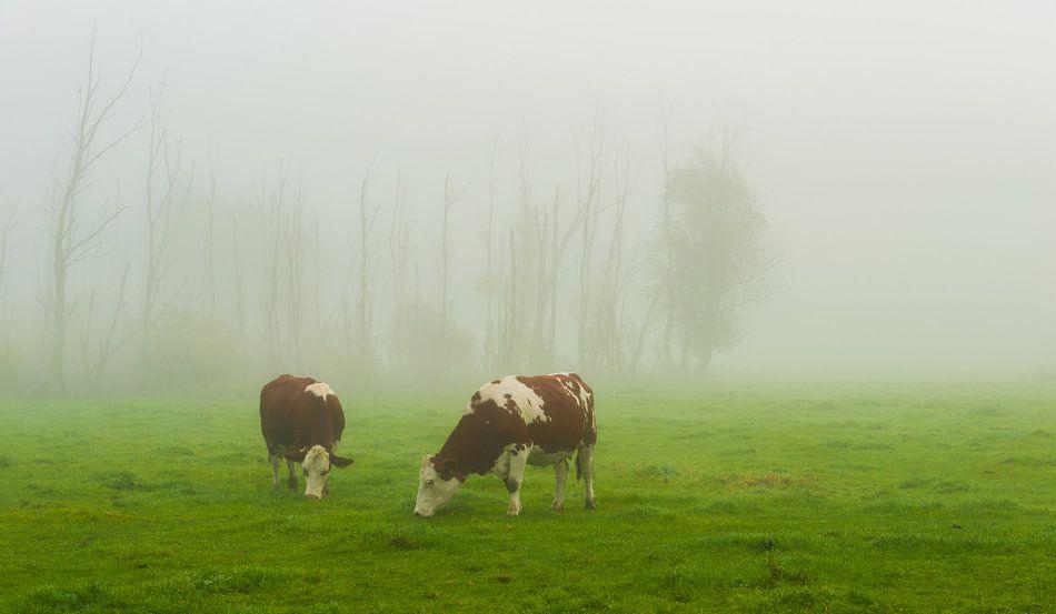 Good misty morning ...