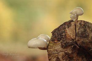 Porzellan-Pilze von cindy kuiphuis
