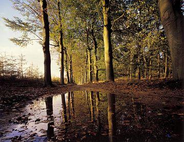 Ondergelopen bospad van