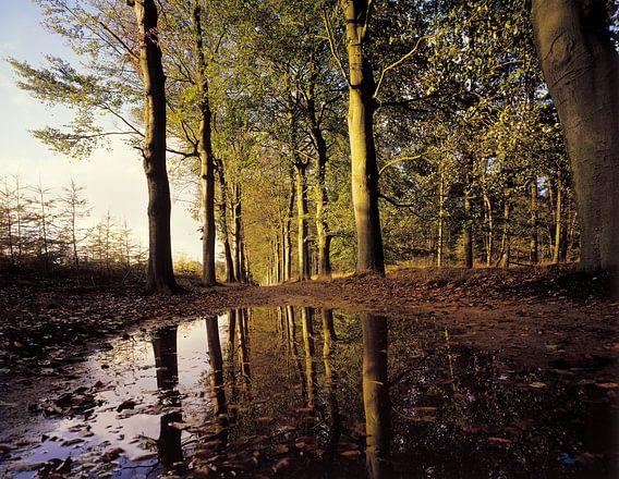 Ondergelopen bospad van Rene van der Meer