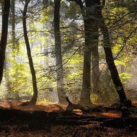Forest of Dancing trees. von Saskia Dingemans
