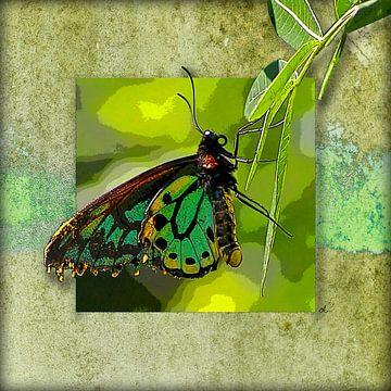 Vlinder | Richmond Birdwing van Dirk H. Wendt