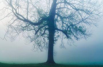 Griezelig zijn van Joris Pannemans - Loris Photography