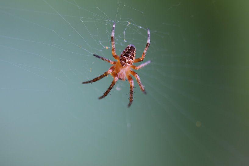 Toile d'araignée dans la toile sur Paul Franke
