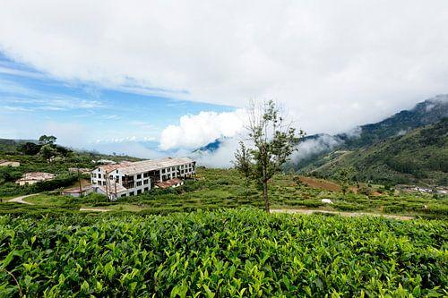 Verlaten theefabriek Sri Lanka