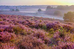 Misty Morning van Marcel Moonen