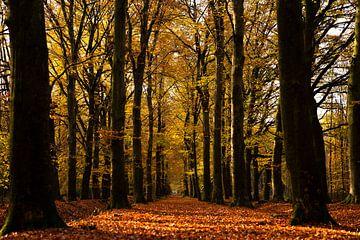Die Wald-Allee in Herbstfarben von elma maaskant