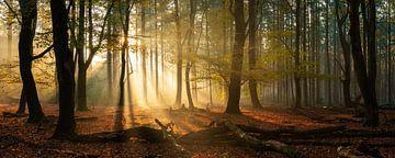 Speulderbos panorama im Herbst mit schönen Sonnenstrahlen von Martin Podt