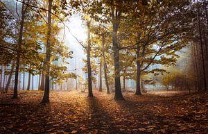 Lichtstralen in het herfstbos van