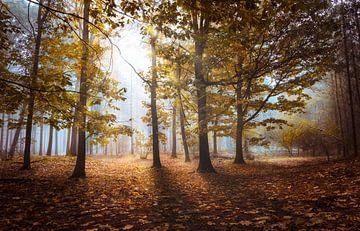 Sunrays in morning autumn von Rob Visser