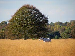Nederlandse Campina tijden herfst