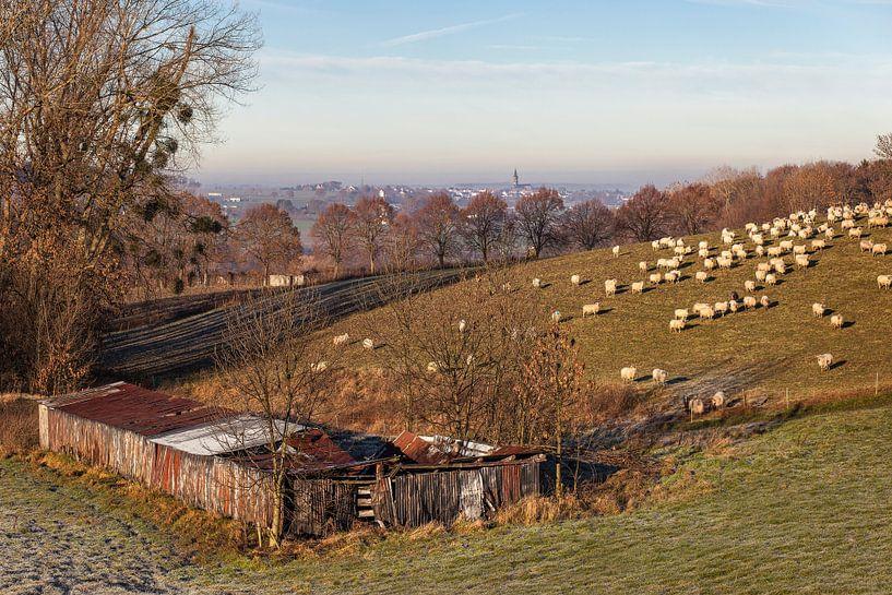 Heuvel met schapen in Vaals van John Kreukniet