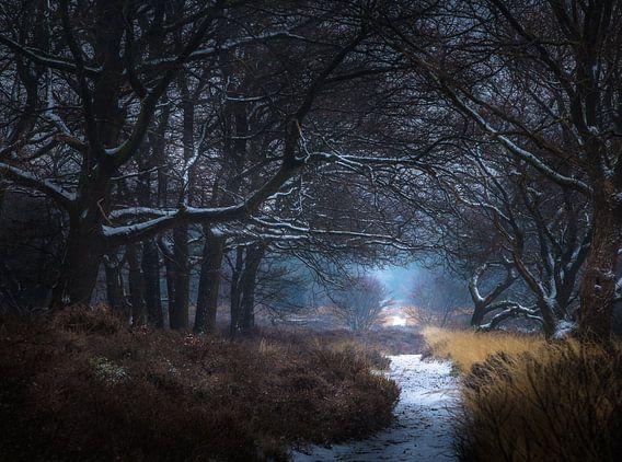 Winter nationaal park Sallandse heuvelrug