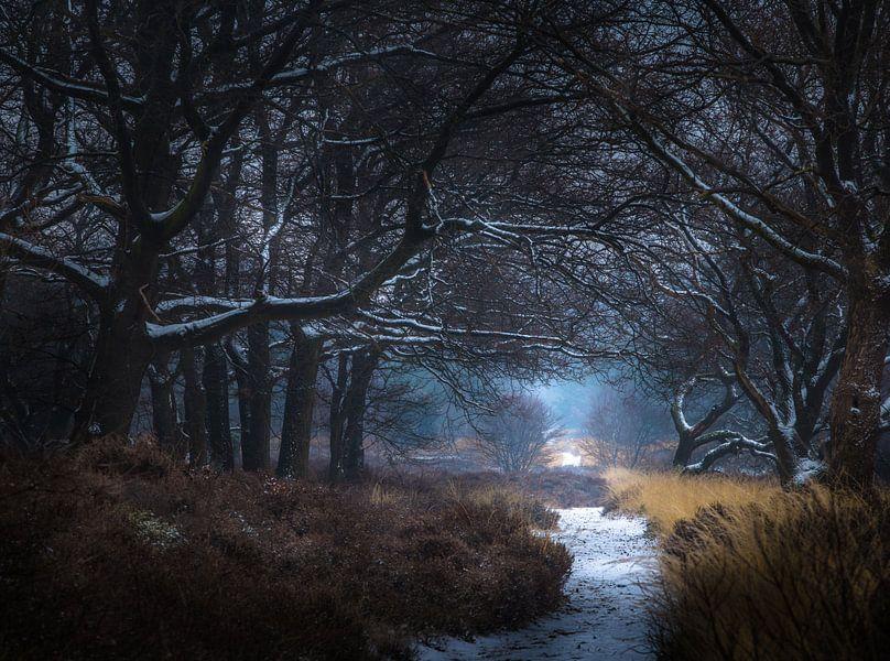 Winter nationaal park Sallandse heuvelrug van Martijn van Steenbergen
