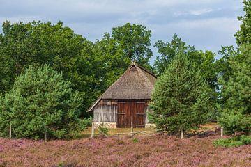 Bauernhaus in Heidelandschaft,Heideblüte, Niederhaverbeck, Naturpark Lüneburger Heide, Niedersachsen