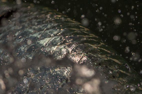 Vis als kunst van Erik de Rijk